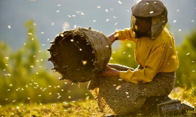 Land des Honigs - Bild 4