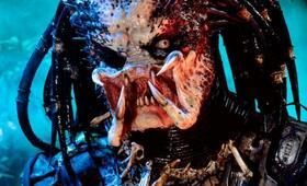 Predator - Bild 13