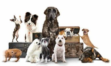 Das Hundehotel - Bild 12