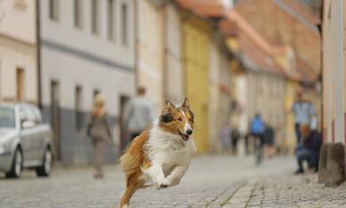 Lassie - Eine abenteuerliche Reise - Bild 9