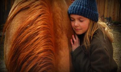 Herzenssache - Ein Pferd für die ganze Familie - Bild 5