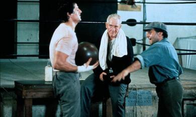 Rocky mit Sylvester Stallone - Bild 10