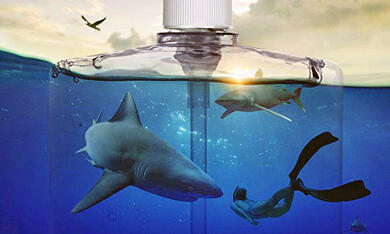 Sharkwater Extinction - Bild 7