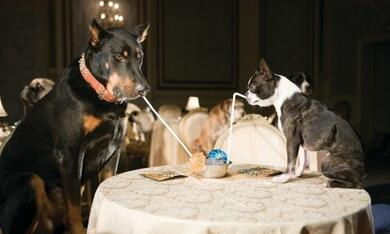 Das Hundehotel - Bild 10