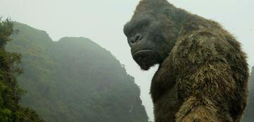 King Kong grübelt über seine Kinoplanung nach