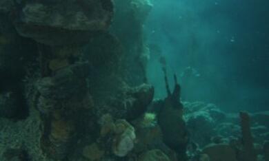 Aliens der Meere - Bild 6