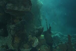 Aliens der Meere - Bild 6 von 12