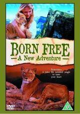 Born Free - Frei geboren - Poster