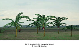 Von Bananenbäumen träumen - Bild 17