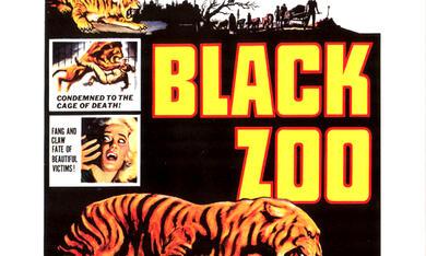Black Zoo - Bild 1