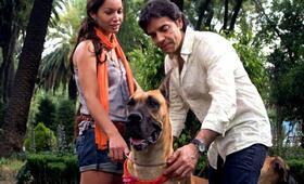 Eugenio Derbez 7 - Bild 11