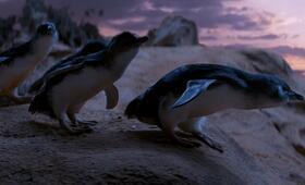 Oddball - Retter der Pinguine - Bild 1