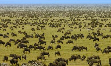 Serengeti - Bild 8