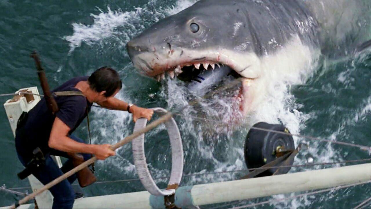 Tolle Anatomie Eines Hais Fotos - Anatomie Von Menschlichen ...