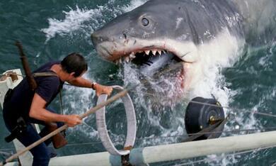 Der weiße Hai - Bild 8
