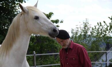 Peter Pfister - Der Pferdemann - Bild 2