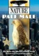 Pale Male - Ein Bussard in New York
