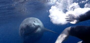 Bild zu:  In Bait werde Jugendliche den Haien vorgeworfen