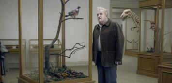 Bild zu:  A Pigeon Sat on a Branch Reflecting on Existence