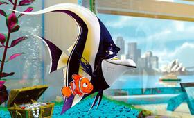 Findet Nemo - Bild 5