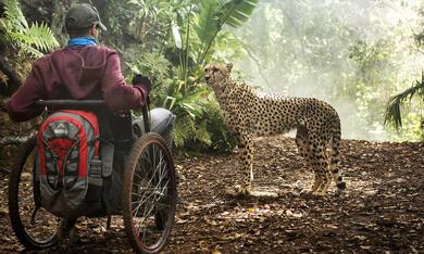 Kilimandscharo - Reise ins Leben mit Kostja Ullmann - Bild 8