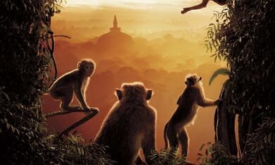 Im Reich der Affen - Bild 3