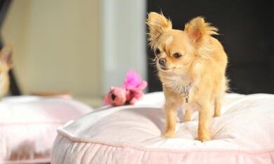 Beverly Hills Chihuahua 3 - Bild 11