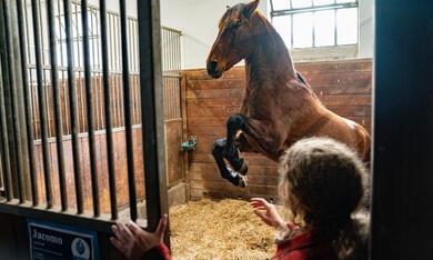 Reiterhof Wildenstein - Der Junge und das Pferd - Bild 5