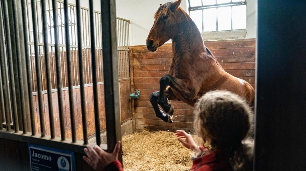 Reiterhof Wildenstein - Der Junge und das Pferd