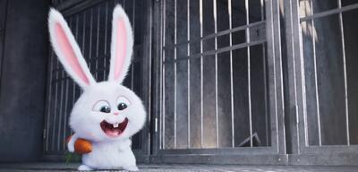 Das Kaninchen Snowball in Pets