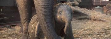 Mutter-Kind-Liebe in Dumbo