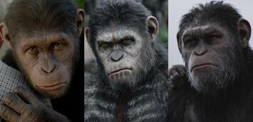 Bild zu:  Planet der Affen: Prevolution/Planet der Affen: Revolution/Planet der Affen: Survival