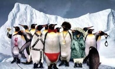 Die verrückte Reise der Pinguine - Bild 2