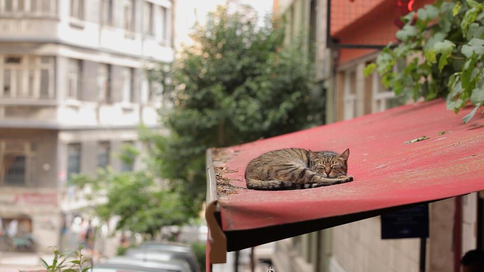 Kedi Von Katzen Und Menschen Stream