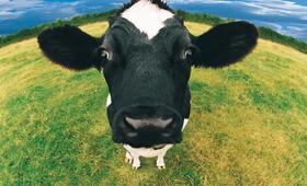 Das System Milch - Bild 18