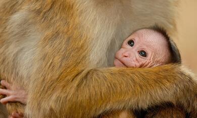 Im Reich der Affen - Bild 8