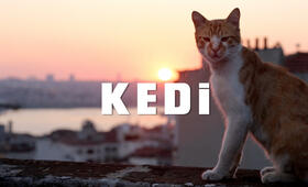 Kedi - Bild 14