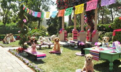 Beverly Hills Chihuahua 3 - Bild 8