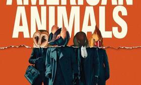 American Animals - Bild 4