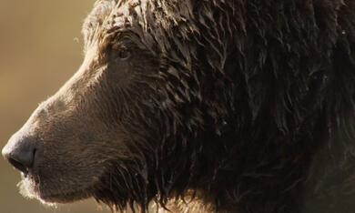 Der Bär in mir - Bild 9