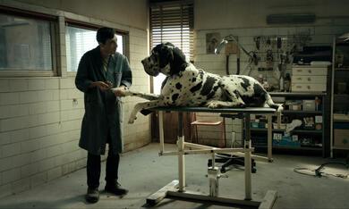 Dogman mit Marcello Fonte - Bild 1