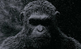 War for the Planet of the Apes - Bild 56