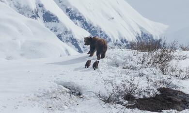 Bären - Bild 9
