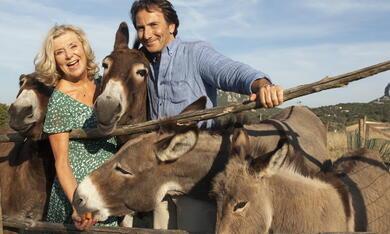 Zwei Esel auf Sardinien - Bild 6