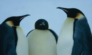 Die Reise der Pinguine - Bild 4