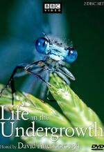Das geheime Leben der Insekten Poster