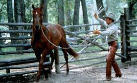 Der Pferdeflüsterer mit Robert Redford - Bild 58