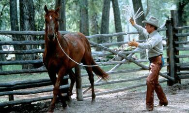 Der Pferdeflüsterer mit Robert Redford - Bild 3