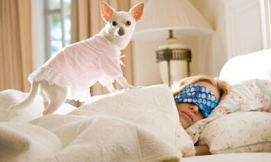 Beverly Hills Chihuahua - Bild 9