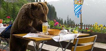 Bild zu:  Der Bär ist los